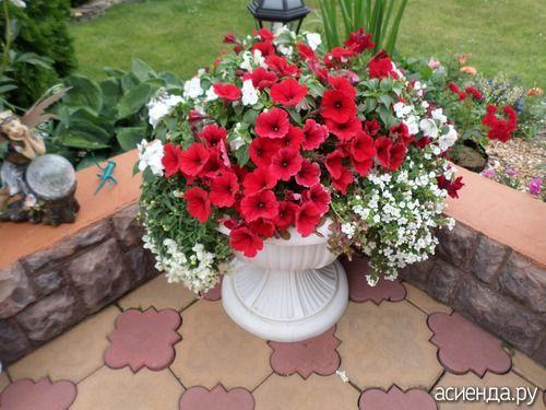 Мой опыт посадки однолетних цветов в кашпо подвесные, горшки, вазоны, ящики.: Дневник пользователя юбаша