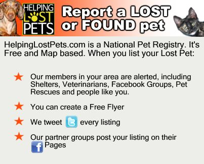 136 best Lost Dog Hints \ Tips images on Pinterest 15 dogs, Dog - lost pet flyer template free
