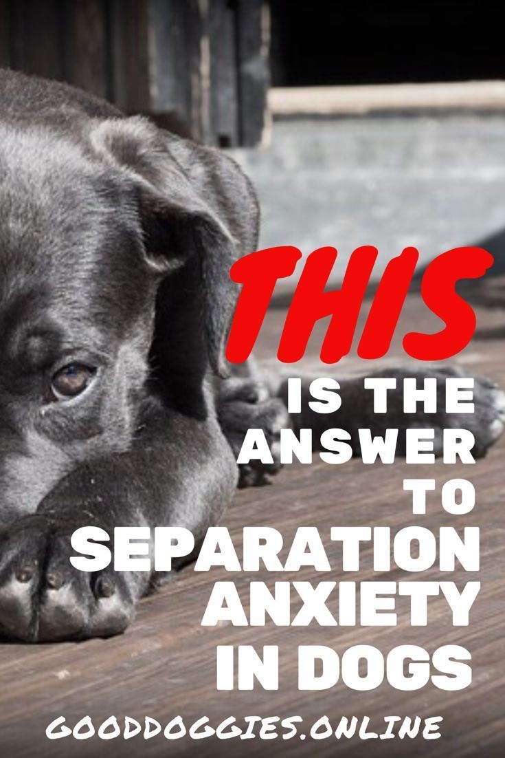 Separation anxiety in dogs and puppies is a common problem. Read these training tips on how to help your dog and find answers. via @KaufmannsPuppy