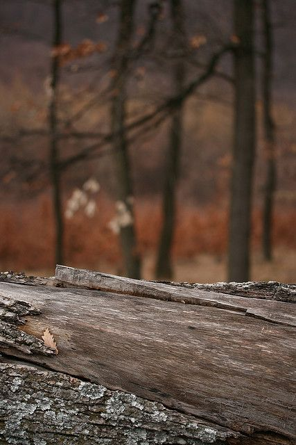Fallen Tree Background Background Images For Editing Picsart Png Background Images Hd
