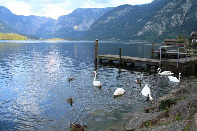 Austria con niños: ruta Region Salzburgo