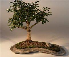 182 best Happy National Indoor Plant Week images on Pinterest ...