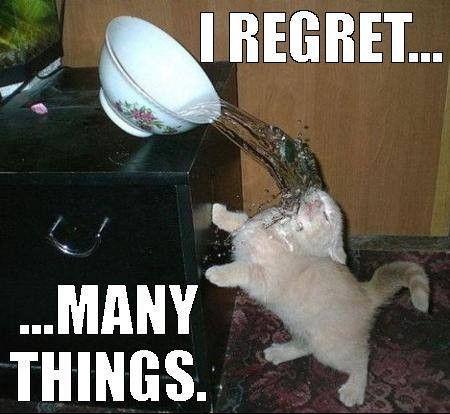 TOP 32 lustige Katzen und Kätzchen Bilder | Lustige Tiere, lustige Katze Domp …