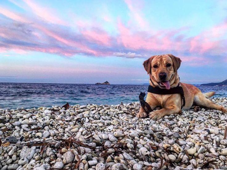 http://ift.tt/1NHxzN3  Che vita da #cani  Buon fine settimana dalla spiaggia della #ghiaie a #portoferraio nello scatto di @sara.autuori87. Continuate a taggare le vostre foto con #isoladelbaapp il tag delle vostre vacanze all'#isoladelba.
