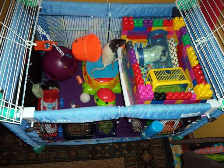 14 best images about diy rat cages on pinterest mansions for Diy playpen for guinea pigs