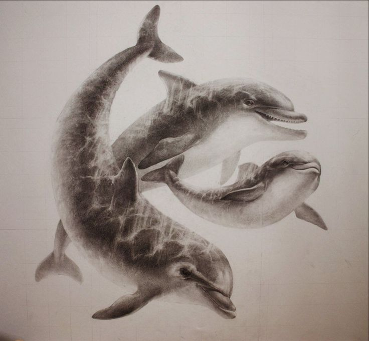 Dolphins on Behance