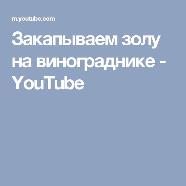 Закапываем золу на винограднике - YouTube