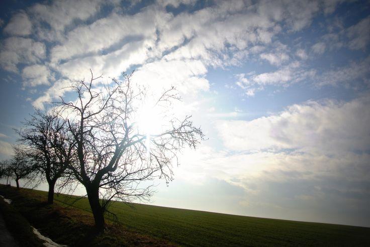 Spring green dream #spring #landscape