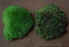 WHEN AND HOW-TO WATER MOSS