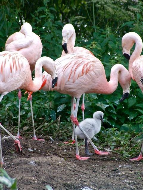 Its a Baby Flamingo!!!!!!!