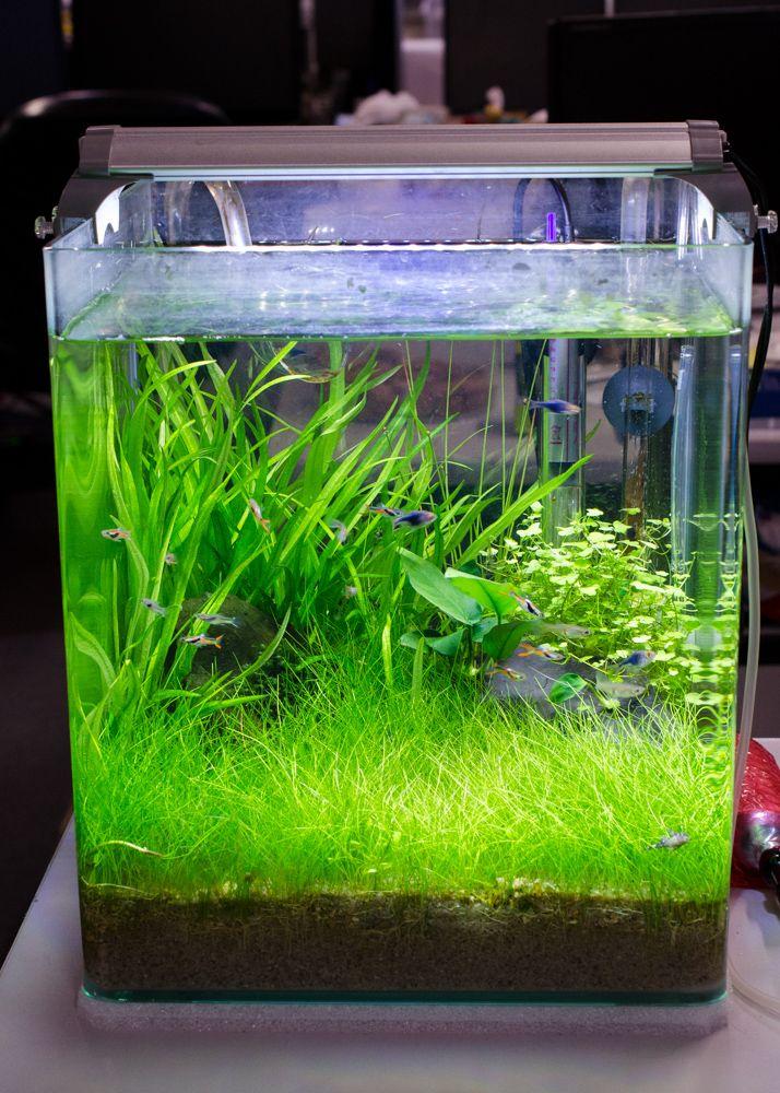 Best 25 nano aquarium ideas on pinterest nano tank for Plant fish tank