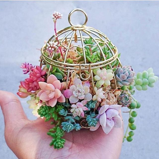 I love this ✌️ mini basket by @charmingsucculents via @crystal.tribe #fairyblooms #succulents