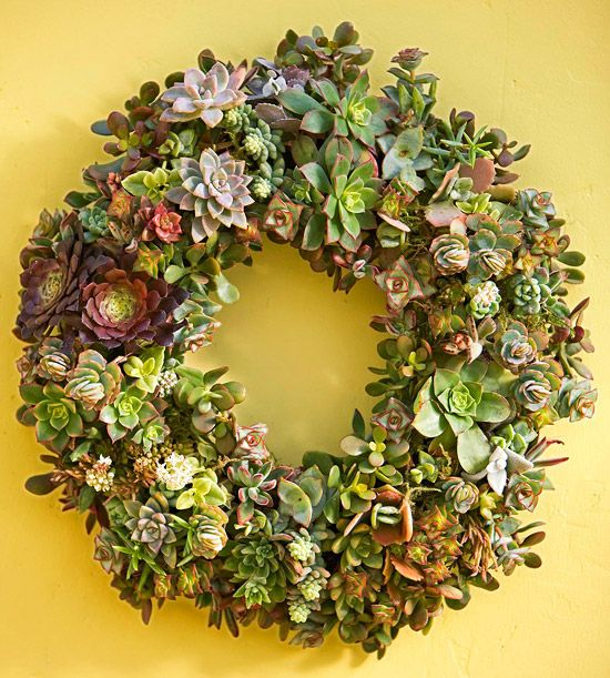 Finishing Touches: Idea, Secret Gardens, Succulents Wreaths, Front Doors, Succulent Wreath, Living Wreaths, Diy Succulents, Diy Projects, Gardens Tips