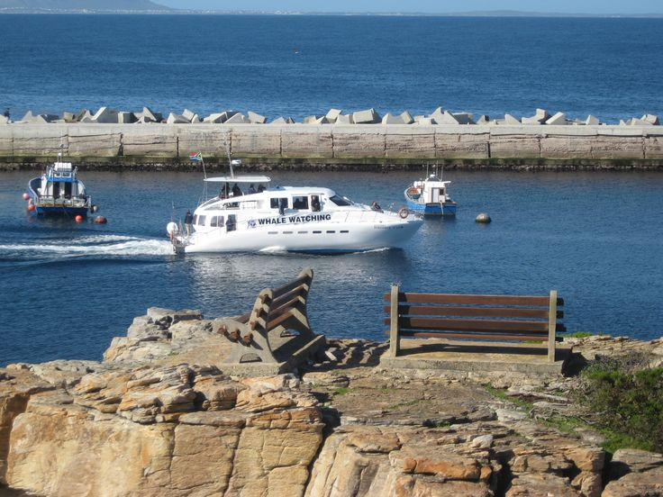 We have 3 whale watching boat companies in Hermanus.  They all leave from the New Harbour - 2 km's from our guest house (1km form our self catering apartmetns).ehy all l