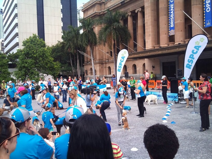 Thank you SO much to everyone who attended the World's Biggest Beg yesterday to launch our #MillionPawsWalk in Brisbane City! We had such a great time meeting fellow animal lovers. Thanks again to all our volunteers (human AND doggies!) - we had a ball. ♥ the RSPCA Qld team. http://www.millionpawswalk.com.au/Queensland.htm