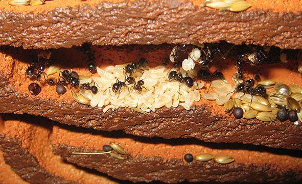 Costruire un formicaio