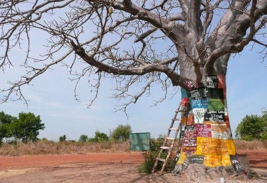 Baobab in the Gambia @The Gambia Blog