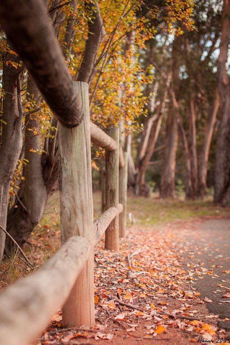 les 25 meilleures id es de la cat gorie chute des feuilles sur pinterest feuilles d 39 automne. Black Bedroom Furniture Sets. Home Design Ideas