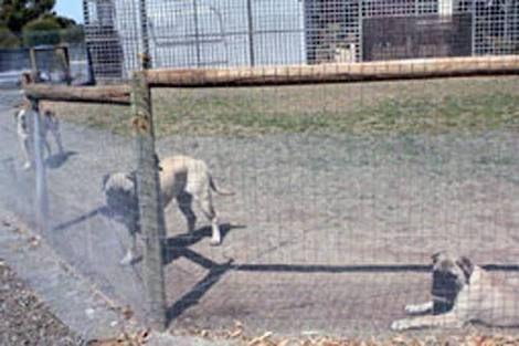 Resultado de imagem para snake-proof fence