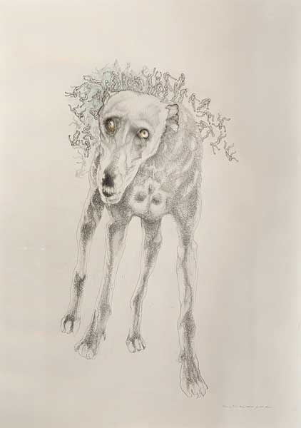 judith mason -Fleas on Time's Dog 2010/11 Pencil and coloured pencil on paper (1475 x 1045mm)