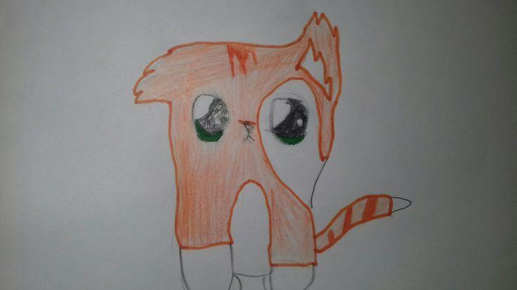 Cat Orange. Moly
