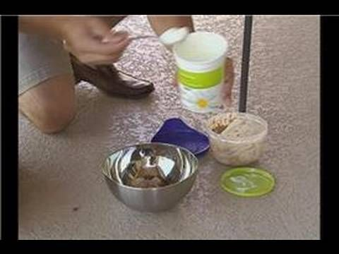 You Can Have A Dog In The Home – Precise Dog Food