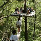 Our 4 hour Canopy Tour or Walk in the Clouds provides visitors a glimpse into canopy ecology while offering a recreational adventure.