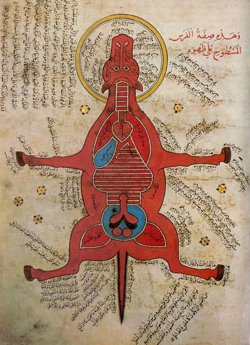 Anatomy of a horse, From a 15th century AD Egyptian document at the University Library, Istanbul