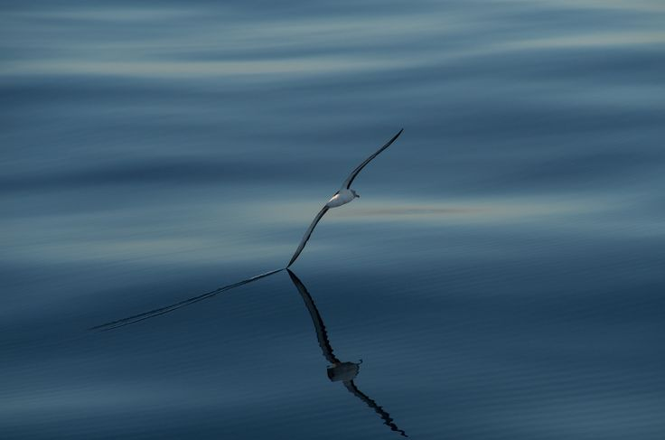 Photo Winging it by Leon Berard on 500px