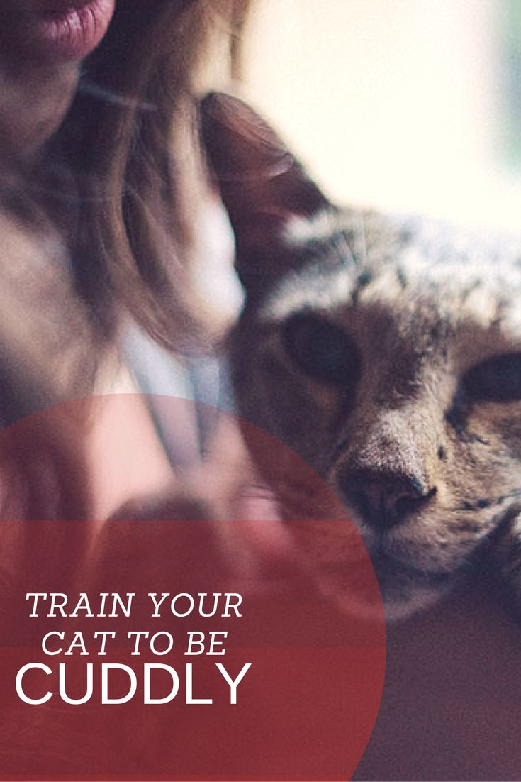 11 Ways to Train Your Cat to Be More Snuggly: https://kittyclysm.com/train-your-cat-to-be-snuggly/