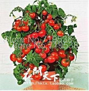 Купить товарБонсай семена помидоров мини вишня горшке фрукты овощи органические свежие 20 seeds / pack в категории Карликовые деревьяна AliExpress.       Нажмите ниже для более выбрать:             Семян цветов                 Семена овощей