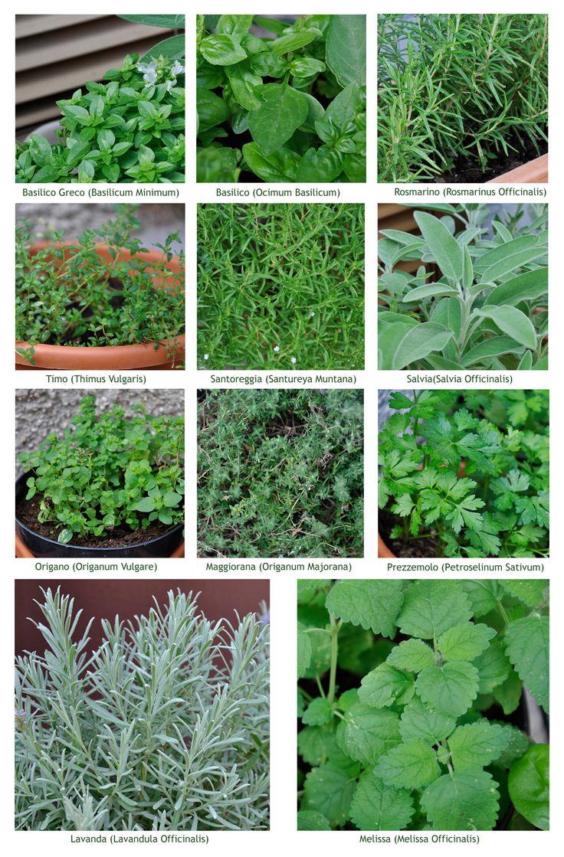 Erbe Aromatiche Herbs Herbs Spices Pinterest