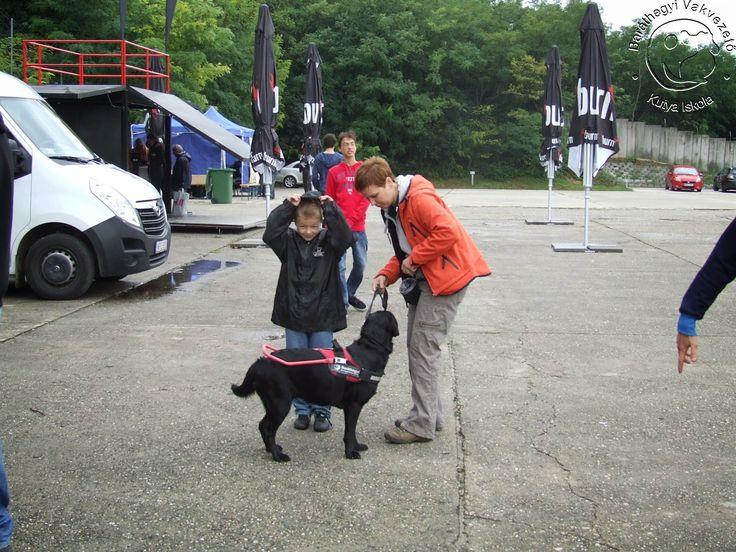 Kipróbálták sokan milyen érzés lefedett szemmel megbízni egy vakvezető kutyában...