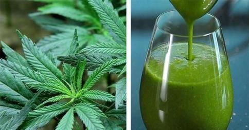 El zumo de hojas de Marihuana: ESPECTACULAR para la salud