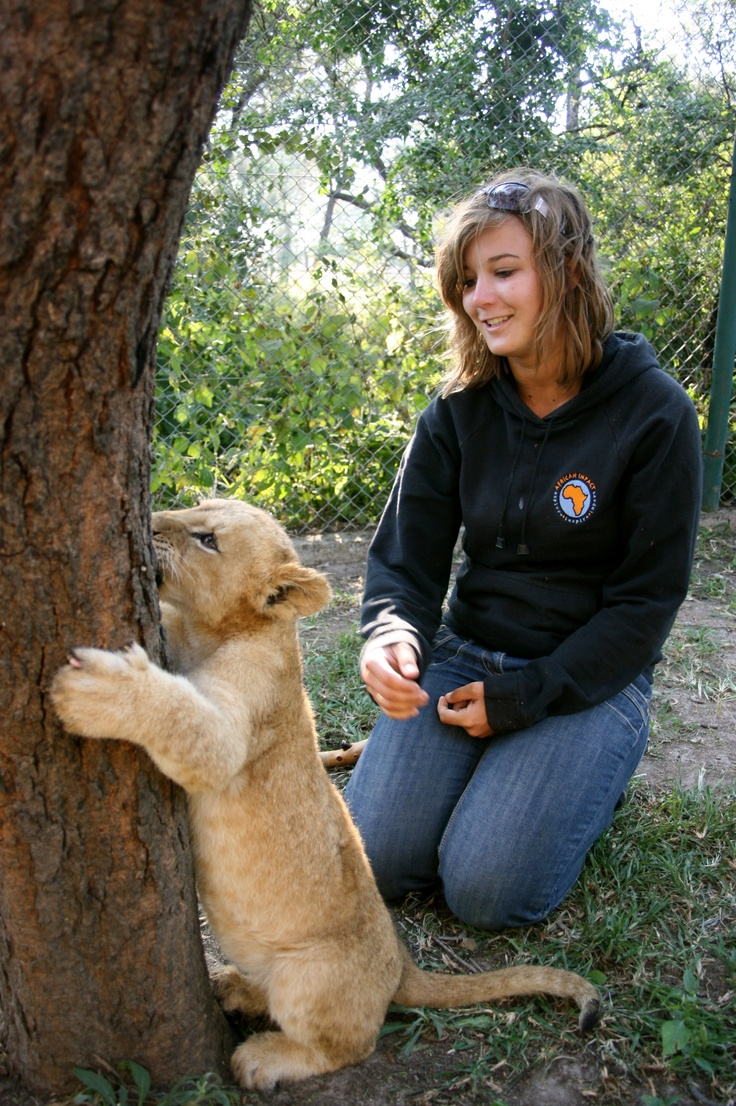 As a volunteer you will get involved in the vital research of the lions' behaviour, and enjoy hands on volunteer work with lions, on the world's only significant programme for their release into the wild.