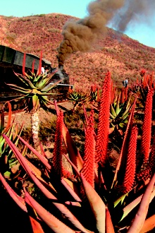 It's that time of year when people flock to the little KZN town of Creighton for the spectacular Aloe Festival – and choo-choo trains