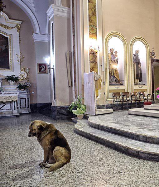 Dieser Hund geht jeden Tag in die Kirche und wartet dort auf sein Herrchen, weil er ihn dort zum letzten Mal gesehen hat. Er weiß ja nicht, dass sein Herrchen damals beerdigt wurde.