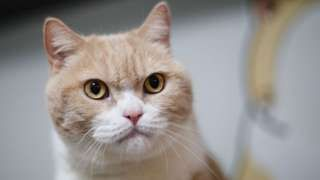 Pets at Home recalls food after cats 'collapse' - BBC News