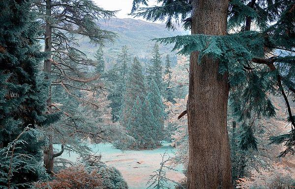 TREES FRAMING. NATURE IN ALIEN SKIN by JENNY RAINBOW.   Beautiful day amongst the glorious nature in Benmore Botanical Garden, Scotland processed in Alien Skin tones..  #Art #JennyRainbowFineArtPhotography #FineArtPhotography #Scotland #Blue #InteriorDesign #ArtForHome #HomeIdeas #HomeDecor #Canvas #FramedPrints #MetalPrint #BenmoreGarden  #Landscape #FineArtLandscape
