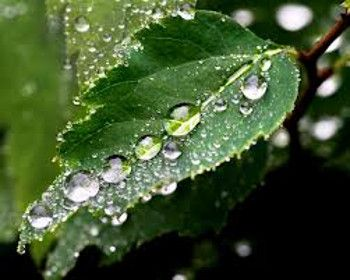 The rain nourishes the plants in spring