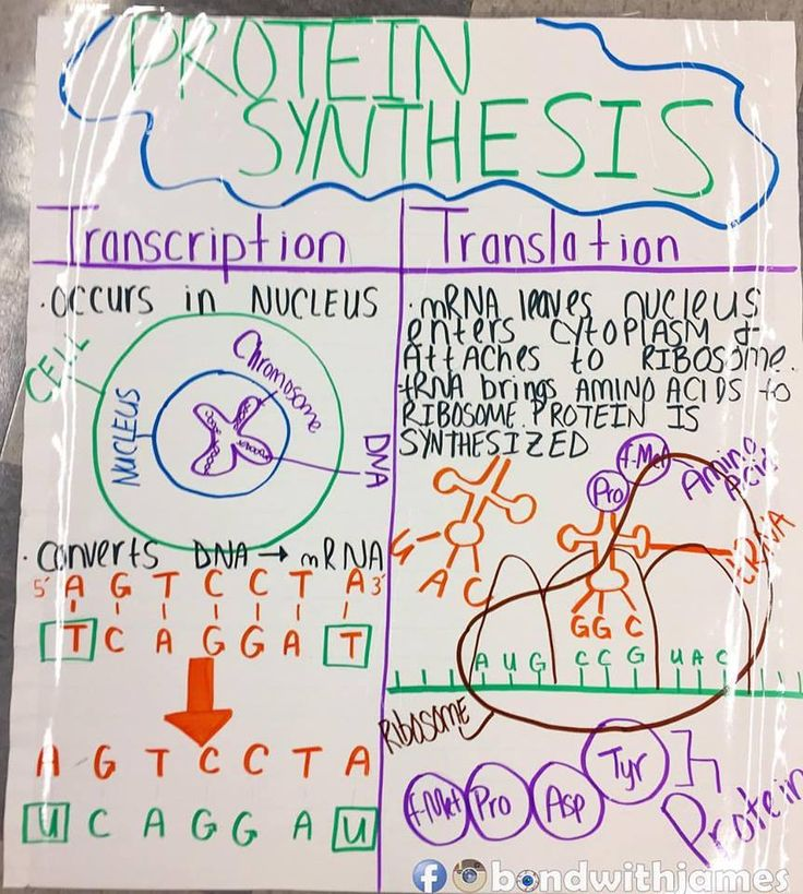 1545 best biology images on pinterest biology lessons life anchor charts that i had my in class tutors do for the biology team malvernweather Gallery