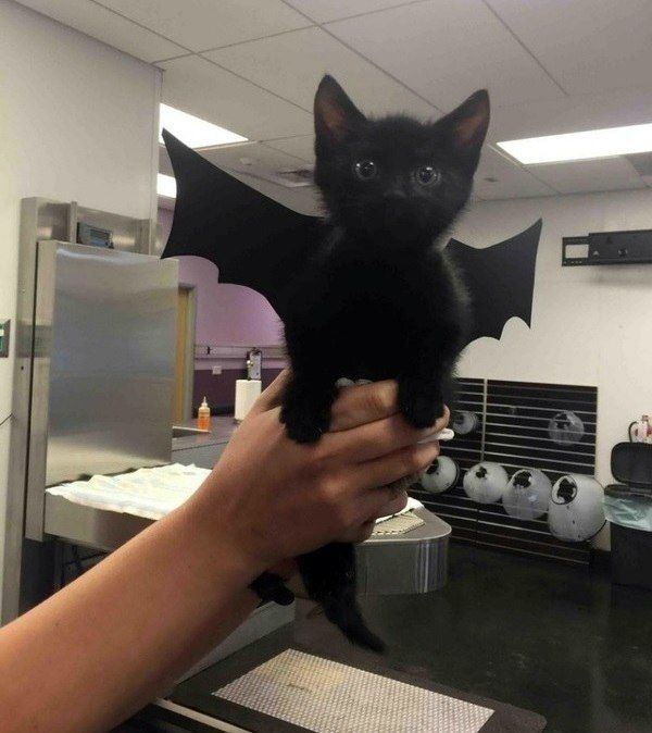 This simple but incredibly effective bat-cat costume.