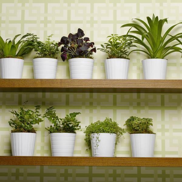 79 best plantas de interiores para decorar el hogar images - Plantas para decorar interiores ...