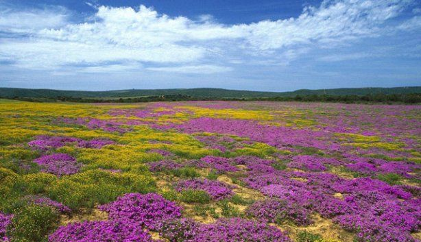 #FlowerSeason #ColoursEverywhere #HaveYouSeenIt #LetsPlan #LatitudeVentures (scheduled via http://www.tailwindapp.com?utm_source=pinterest&utm_medium=twpin&utm_content=post10402890&utm_campaign=scheduler_attribution)