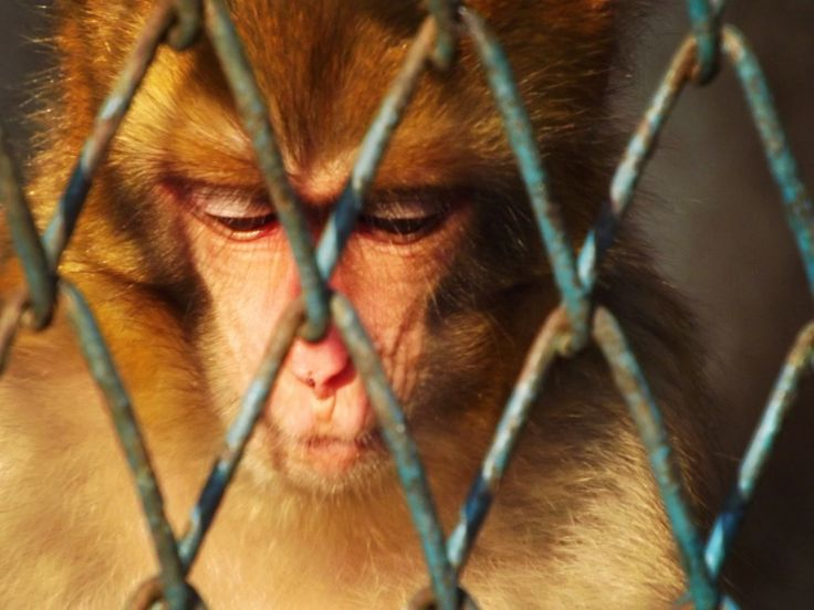 Zoos: Animal Prisons | Animals Used for Entertainment | Issues | PETA Asia