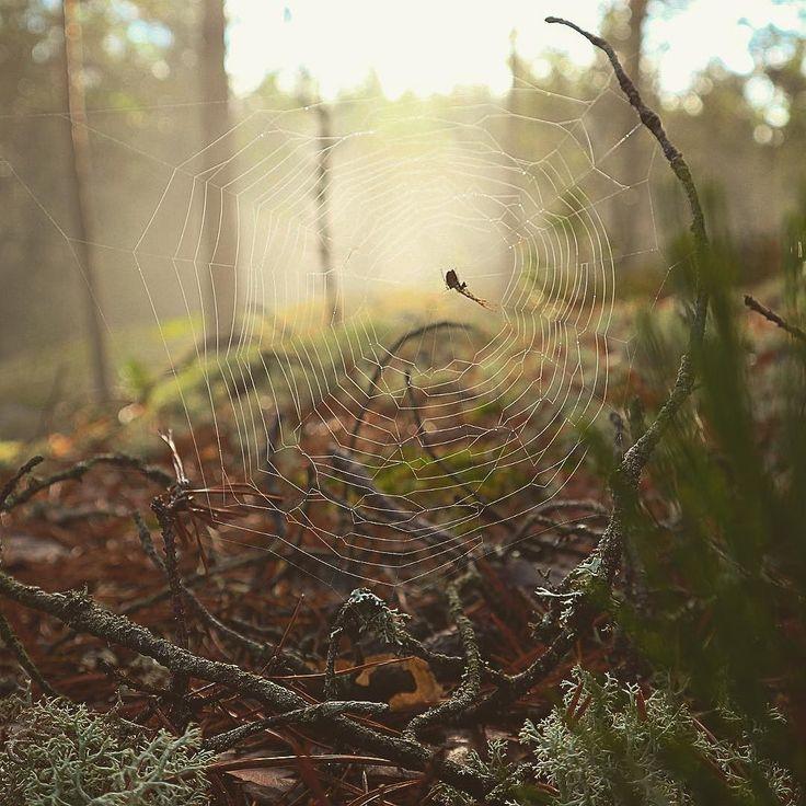 #spider #nature