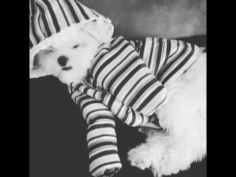 Dog marley fofo#baby