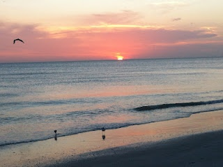 Madeira Beach Fl- didn't capture the dolphins swimming by.