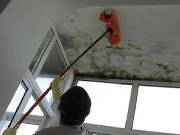 Limpar paredes com mofo