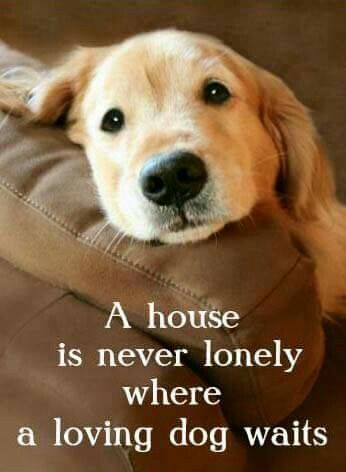 Cute animals with love quotes - photo#29